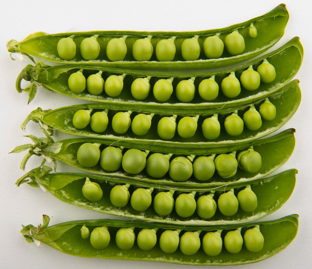 "Credits ""Peas in pods - Studio"" by Bill Ebbesen - Own work. Licensed under CC BY-SA 3.0 via Wikimedia Commons - https://commons.wikimedia.org/wiki/File:Peas_in_pods_-_Studio.jpg#/media/File:Peas_in_pods_-_Studio.jpg"