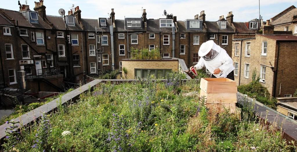 apicoltura-urbana